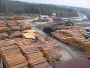 Предлагает к продаже лес - кругляк из России регионов Сибири.//